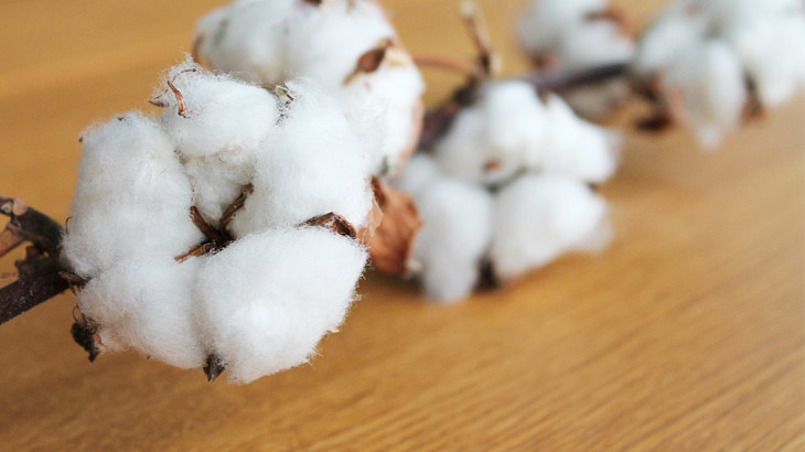 cotton_the_raw_material_for_cotton_pearls