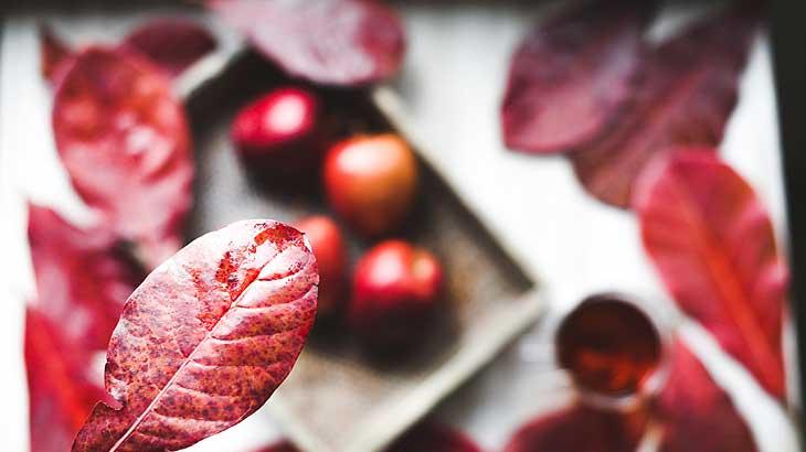 autumn_image_pic
