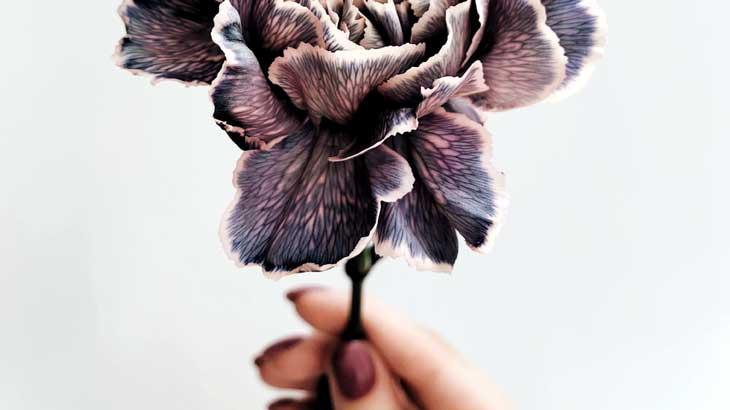 vintage-color-flower-pic