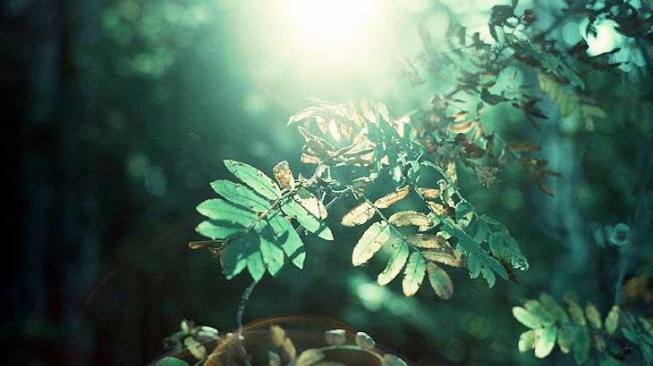Ultraviolet image image