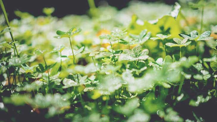 Fresh-green-image2