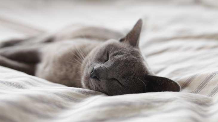 Image-of-sleep