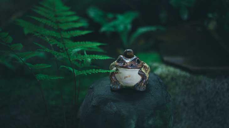 Image photo of frog